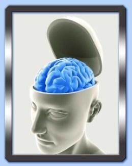 cervello_aperto