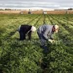 UILA: lavoratori agricoli, servono i fatti, oltre alle rassicurazioni del ministro