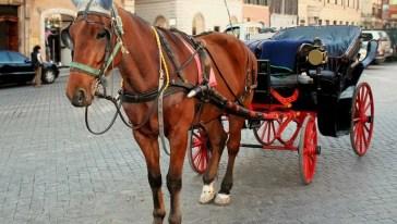 Sconfitta per gli animalisti: le botticelle tornano in strada a Roma, il Consiglio di Stato blocca il regolamento del Comune