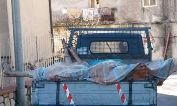 L'animalista Rizzi denuncia chi uccide il maiale: 'Non siamo in Cina o in Africa, ma a Pimonte'