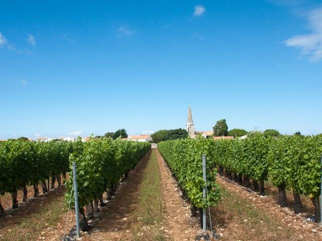 Vignes Sainte Marie de Ré