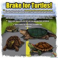 Turtles Crossing