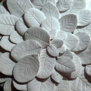 Cotinus_blanc