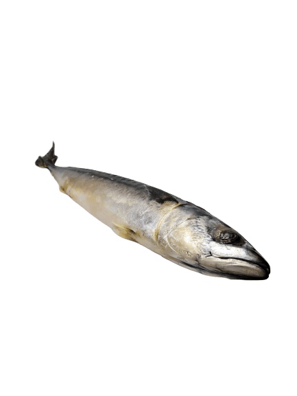 Box of Mackerel Fish (Titus Fish) 4