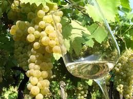 vino vernaccia