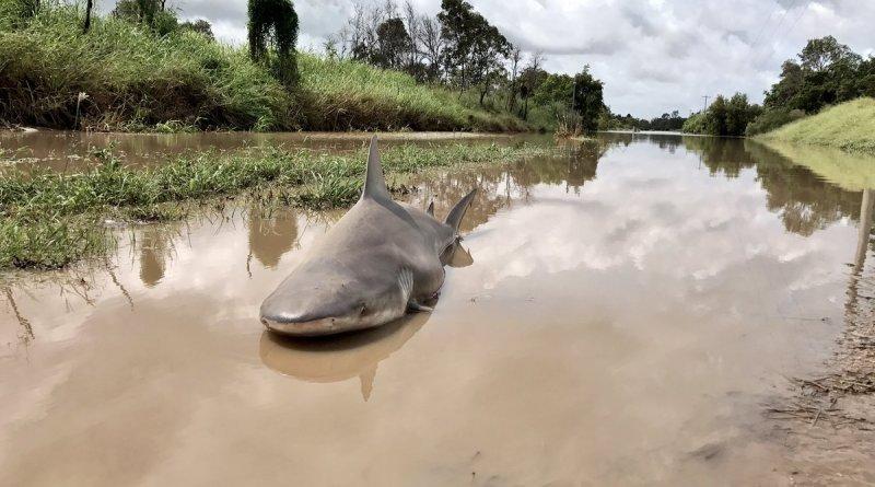 Lo squalo morto in Australia