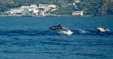 delfini eolie
