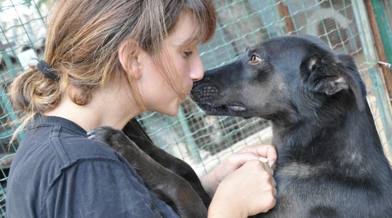 Rifugio del cane abbandonato, anniversario con Natale Giunta
