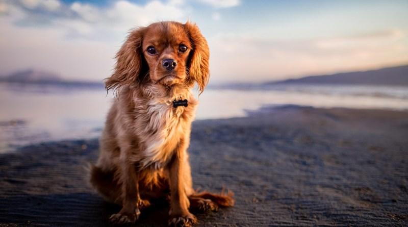 leishmaniosi, attenzione ai vostri cani in estate