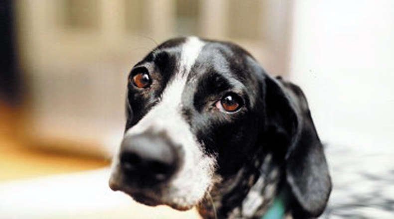 Allarme bocconcini avvelenati per le strade di Palermo: numerose le segnalazioni degli animalisti dopo la strage di cani di Sciacca