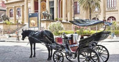 petizione per dire stop al trasporto cavalli
