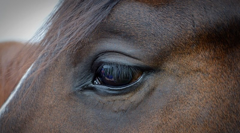 cavalli denutriti nel Catanese