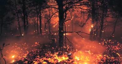 """Il presidente della Regione Siciliana Nello Musumeci annuncia: """"Abbiamo già individuato e accantonato parte delle risorse economiche per la campagna antincendio boschivo"""""""