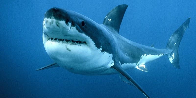 squalo avvistato Messina