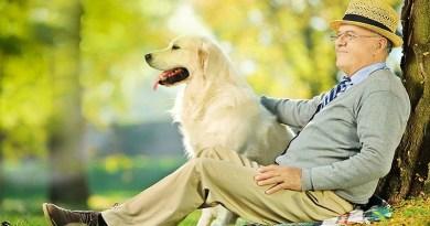 Un cane allunga la vita. Una ricerca svedese dimostra che i proprietari di cani, soprattutto i single, hanno minore rischio di morte per malattie cardiovascolari