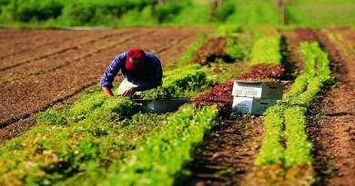 Tagli fondi Agricoltura. Lombardo (Facciamo Eco): Sicilia rischia 123 milioni di PSR. Appello a Patuanelli