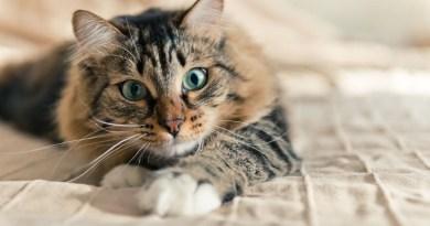 Assistenza veterinaria pagata dal comune per un gatto randagio affetto dall'Aids felino a Campobello di Mazara. Ed è polemica sulla spesa affrontata
