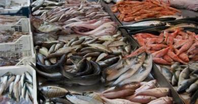 Palermo, sequestrati 570 chili di pesce a Ballarò e al Capo