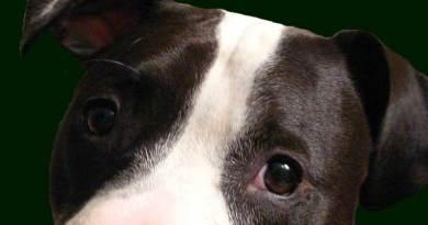 Catania, cane chiuso in uno sgabuzzino senza cibo e acqua. Denunciato il proprietario