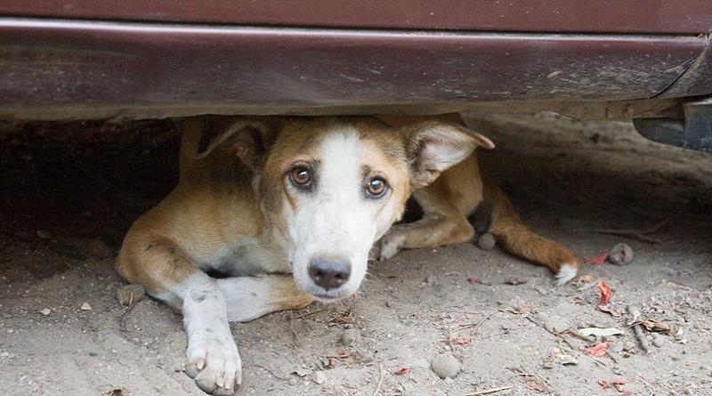 Randagismo, la Regione siciliana stanzia 2 milioni di euro per la sterilizzazione di cani e gatti. Lo ha annunciato Nello Musumeci