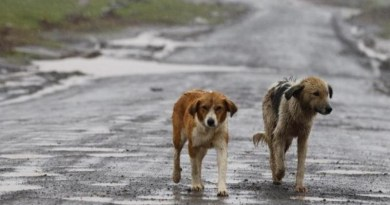 """Trenta cani randagi avvelenati a Sciacca ma l'Enpa lancia l'allarme: """"Ne mancano ancora 20 all'appello"""". Il 25 febbraio manifestazione della Confederazione Associazioni animaliste Regione Sicilia"""