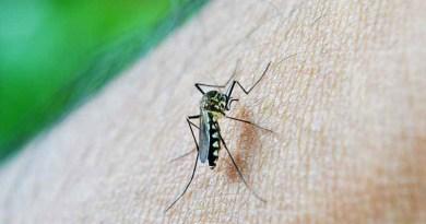 Sta per arrivare in Europa la zanzara che porta Zika, malaria e febbre gialla
