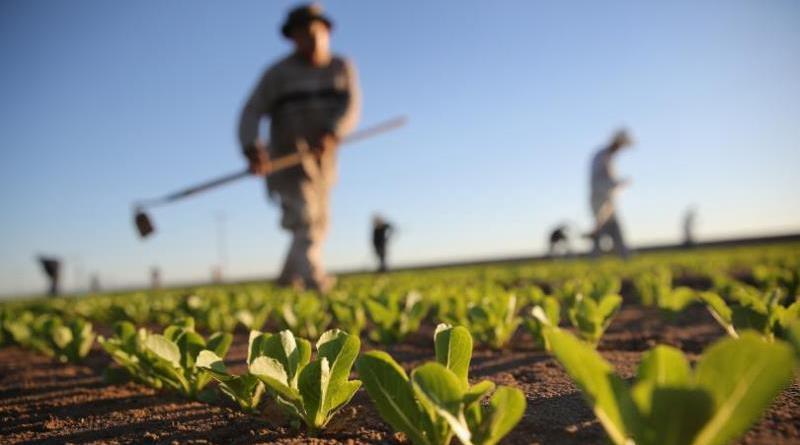 Agricoltura, il 15 giugno sciopero dei lavoratori del settore per il rinnovo del contratto