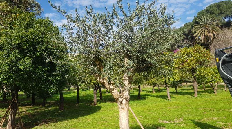 Palermo, a Villa Trabia la prima giornata per le vittime del dovere: in loro ricordo un albero di ulivo
