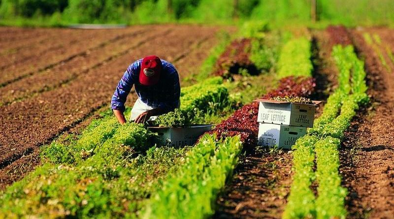 """Danni all'agricoltura per il maltempo, Bandiera: """"Attiveremo tutti i mezzi a disposizione"""""""