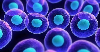 Osservate per la prima volta dal vivo delle cellule in movimento