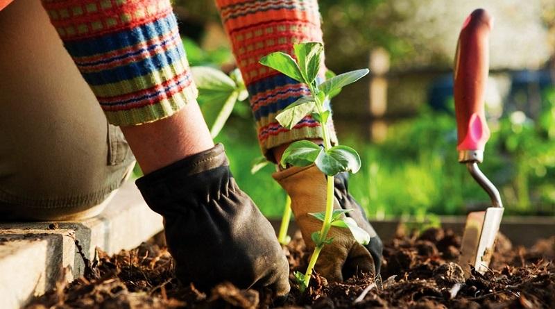Garden Therapy, rilassarsi, combattere lo stress e, al contempo, perdere peso grazie al giardinaggio da fare anche in casa o in ufficio