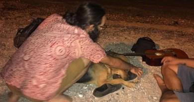 """Porticello, polemiche sul bimbo azzannato da un cane. L'intervento dell'Asva: """"Se ignorate i cani, i cani ignoreranno voi"""""""