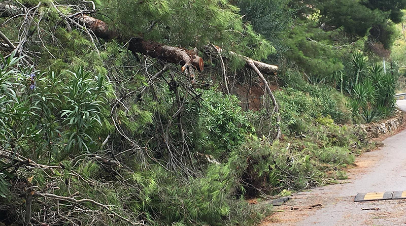 Alberi caduti in via Monte Ercta
