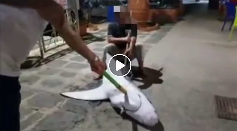 squalo torturato e ucciso