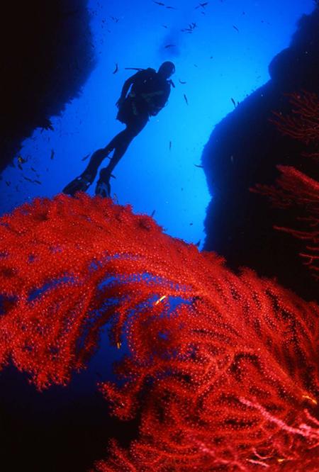 Fondale del mare di Ustica, prima riserva marina in Italia dal 1986
