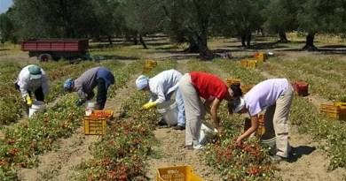 Ragusa, Usb denuncia situazione di grave sfruttamento dei lavoratori agricoli della fascia trasformata nell'estremo sud-est della Sicilia