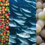 Cibo di Sicilia: pomodoro pachino, pesci, uva