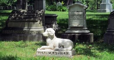 Cimitero degli animali
