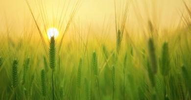 Cia Sicilia, incontro con assessore Bandiera su bandi per liquidità aziende agricole