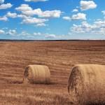 agricoltura, campo con balle di fieno