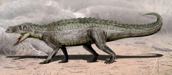 Prestosuchus, antico coccodrillo