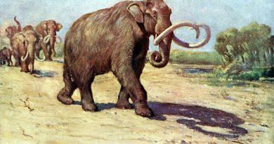 I mammut in centro e sud America