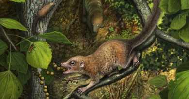 Antico primate arboricolo