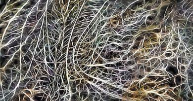 Il sistema nervoso enterico: un secondo cervello all'interno dell'intestino (II parte)