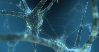 Il ruolo degli astrociti nella stabilizzazione strutturale del cervello