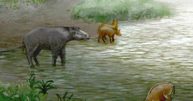 Leptolophus cuestai e Pachynolophus zambranen