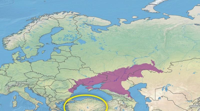 Steppe pontico-caspiche e Anatolia a confronto