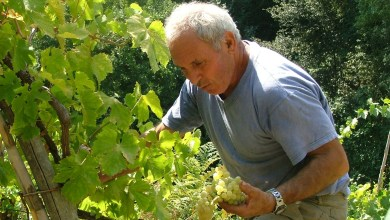 """Photo of Il senso della viticoltura ischitana in un racconto sui vini di """"fatica"""""""