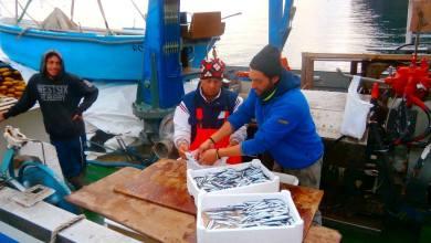 Photo of Finito il fermo biologico, Ischia riscopre la pesca
