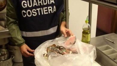 Photo of Controlli natalizi sui prodotti ittici, il bilancio della Guardia Costiera